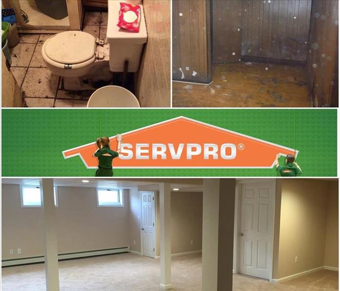 Major Sewer Damage and Mold Damage All In One
